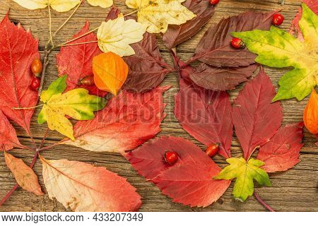 Colorful Fall Leaves On Old Wooden Boards