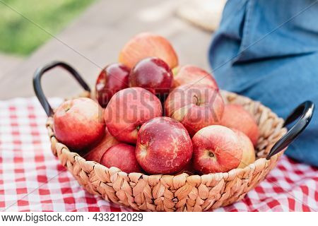 Apple Harvest. Ripe Red Apples In The Basket And In Dark Wooden Crate On Green Grass On The Green Gr