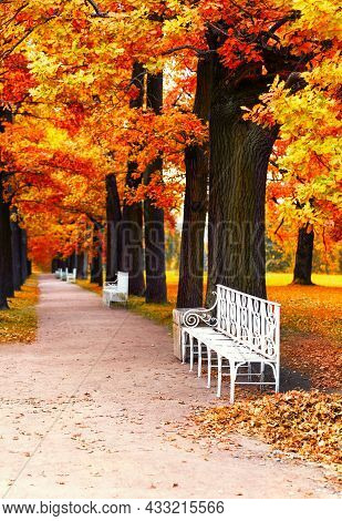 White Bench In The Autumn Park Under Colorful Autumn Trees With Golden Leaves. Beautiful Fall Backgr