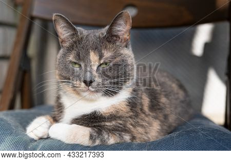Dissatisfied Cat Lies On A Soft Chair And Looks Narrowed Eyes.