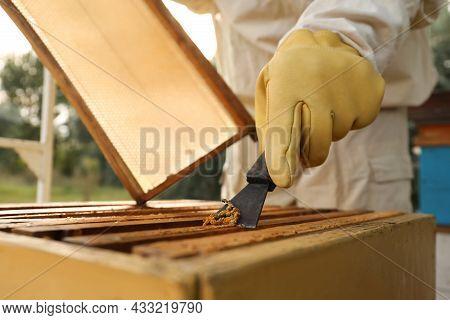 Beekeeper Scraping Wax From Honey Frame At Apiary, Closeup