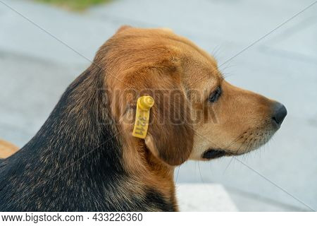 Close-up Of A Serious Beautiful Black And Brown Dog Lying On A Park Bench. Street Dog Without A Bree