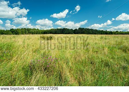 Grassland In Front Of The Forest And Clouds In The Sky