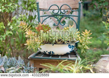 Reused Garden Design Ideas. Old Basin Turn Into Garden Flower Pots. Recycled Garden Design, Diy And