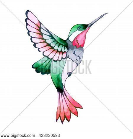 Colorful Hummingbird In Flight With Bright Feathers. Flying Exotic Hummingbird For Spring And Summer