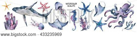 Sea Life Watercolor Ocean Animals Set. Isolated Objects, Illustrstion On White Background. Aquarium
