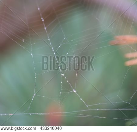 Close Up Of A Spider Web Without A Spider. A Carefully Woven Spider Web.