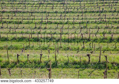 The Spring Landscape In The Collio Vineyard Area Of Friuli Venezia Giulia, North West Italy From The