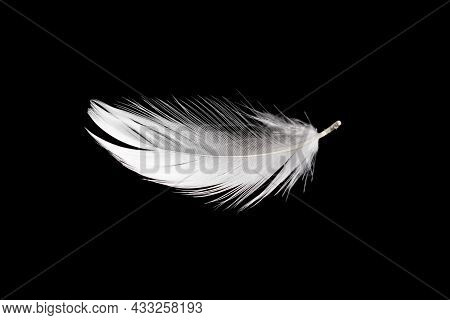 White Duck Feathers Isolated On Black Background