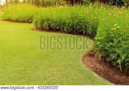 Green Lawn, The Front Lawn For Background, Garden Landscape Design, Yellow Flowers In A Beautifully