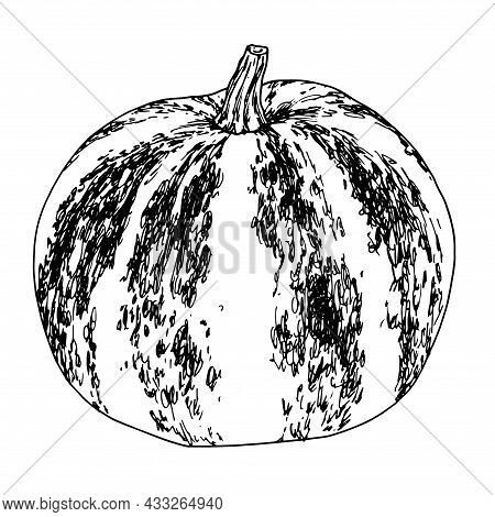 Round Pumpkin. A Pumpkin Drawn In A Sketch Style With A Pattern Of Stripes And Spots, An Isolated Bl
