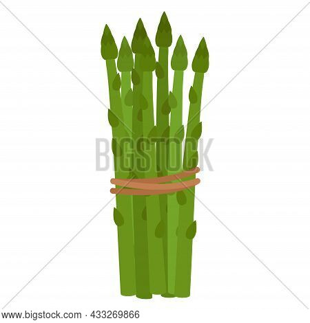 Green Asparagus. Tied In Bunch Ripe Asparagus, Vector Illustration