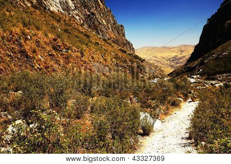 High altitude vegetation on Cohup Valley, Cordiliera Blanca, Peru, South America