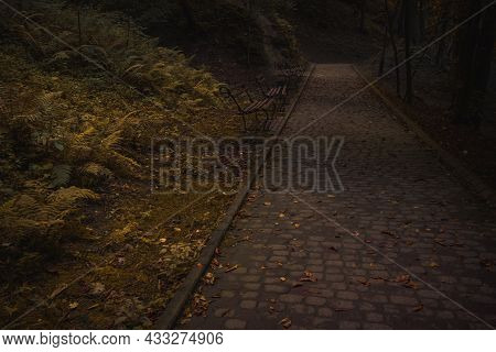 Moody Enchanted Wood Land Nature Environment With Paved Trail And Abandoned Bench Without People In