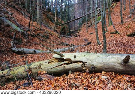 old dead wooden tree in autumn mountain forest, take it in Slovakia, Low Tatra mountains