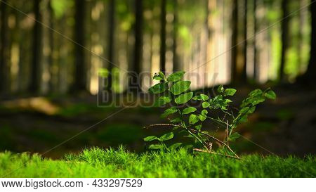 Beautiful Natural Green Background With Forest And Plant In The Moss. Summer Day With Trees And With