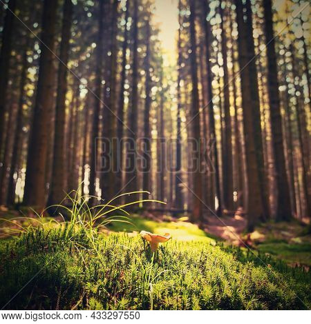 Beautiful Natural Green Background With Forest And Mushroom In The Moss. Summer Day With Trees And W