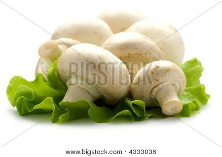 Mushrooms On A Piece Of Lettuce