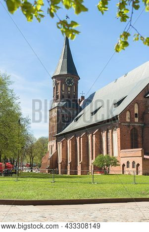 Kaliningrad, Russia - May 10, 2021: Cathedral Facade View Framed With Green Spring Leaves Over Clear