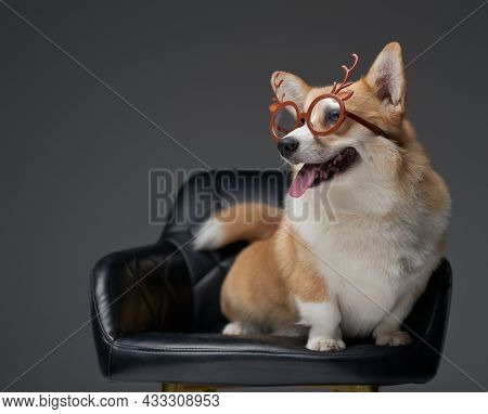 Cheerful Doggy With Eyewear Sitting On Leather Chair