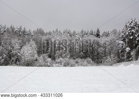 Winter Landscape The Land Is Covered With White Snow, On The Horizon There Is A Winter Coniferous Fo