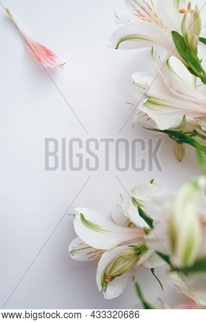 Beautiful White Background With Alstroemeria, Copy Space In The Center