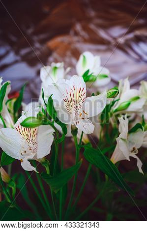 Beautiful Bouquet Of White Alstroemeria On A Background Of Stained Glass