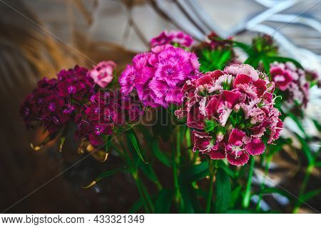 Bouquet Of Flowers Of Different Varieties Sweet William On A Glass Background