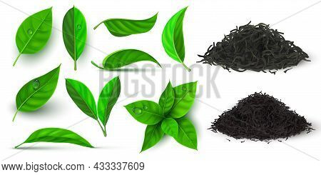 Realistic Dry And Fresh Leaves For Black And Green Tea. 3d Herbal Leaf And Branch With Dew Water Dro