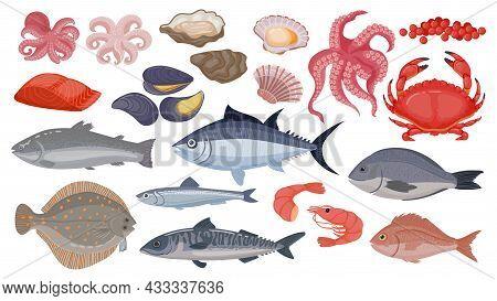 Fresh Raw Ocean And Sea Fish, Tuna, Salmon And Herring. Cartoon Seafood, Shrimp, Mussels, Scallops,