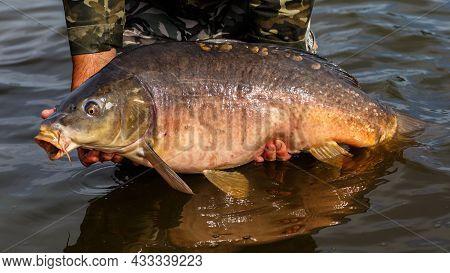 Fishing Adventures, Carp Fishing. Mirror Carp (cyprinus Carpio), Freshwater Fish. Angler With A Big