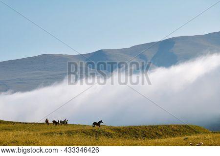 Chechen Scenery. Chechnya,  Russia