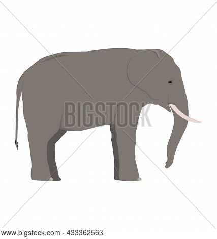 Loxodonta Cyclotis - African Forest Elephant - Side View - Flat Vector Isolated