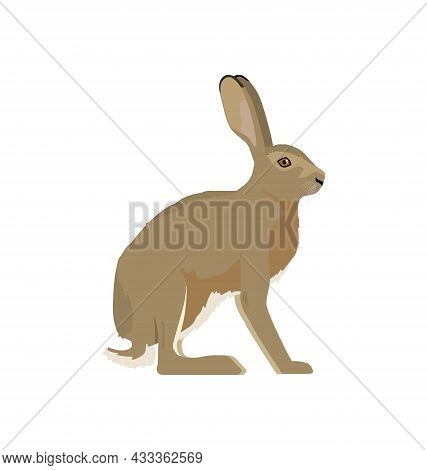 Lepus Europaeus - European Hare - Side View - Flat Vector Isolated