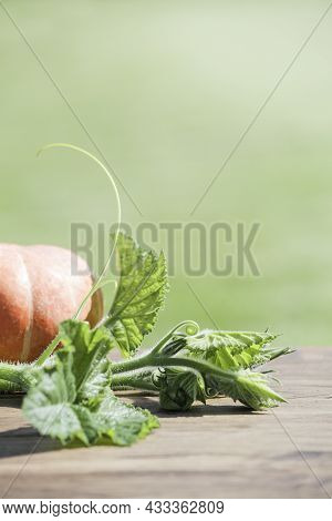 Autumn Harvest. Pumpkin With Leaves On Green Background.concept Of Thanksgiving Day Or Halloween. Au
