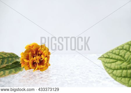 Emty Scene For Product Presentation With Fall Decor. Orange Flower And Leaves For Autumn Sale Advert