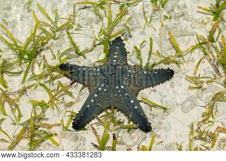 Colorful green and orange starfish on wet sand, Zanzibar island