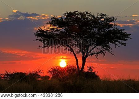 Scenic African savannah sunset with silhouetted tree and red sky, South Africa