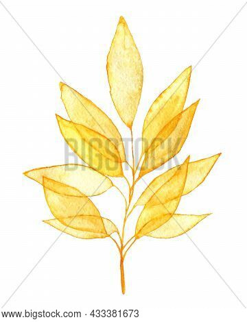 Airy Yellow Leaves On The Twig Watercolor Clipart