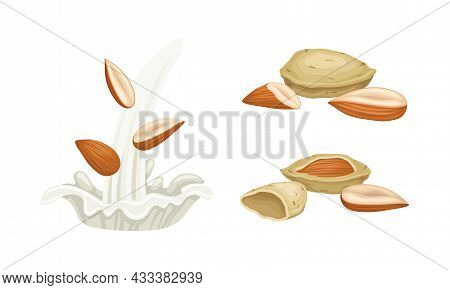 Blanched And Unshelled Almond Nut As Edible Seed And Milk Splash Vector Set