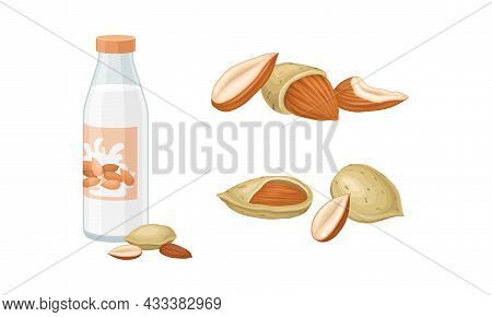 Blanched And Unshelled Almond Nut As Edible Seed And Bottle Of Milk Vector Set