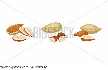 Blanched And Unshelled Almond Nut As Edible Seed Vector Set