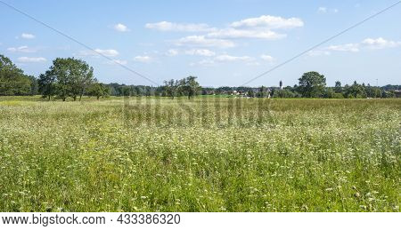 Sunny Rural Scenery Around A Herbal Hayfield At Summer Time