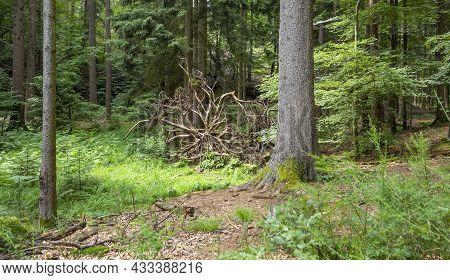 Idyllic Forest Scenery Around Sankt Martin, A Municipality In Suedliche Weinstraße District In Rhine