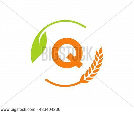 Agriculture Logo On Q Letter Concept. Agriculture And Farming Logo Design. Agribusiness, Eco-farm An