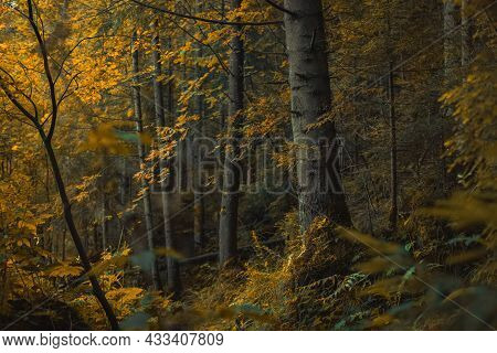Majestic Deep Forest Autumn Season Scenery Landscape Soft Focus Photography With October Yellow Colo