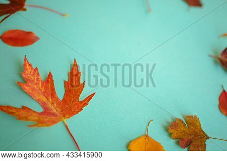 Autumn Creative Composition. Dried Leaves On Blue Background. Fall Concept. Autumn Background. Flat