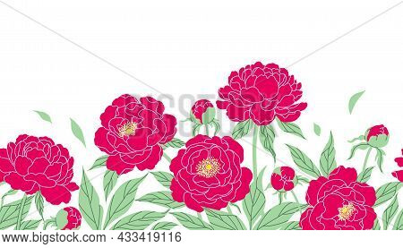 Seamless Horizontal Border With Red Peonies On White Background. Colorful Blooming Garden Flowers In