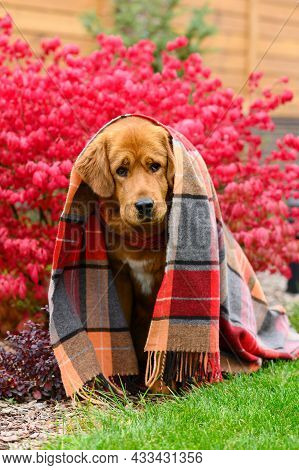 A Very Sad Frosty Dog Sits Covered With A Blanket Outside In Autumn. Vertical Format.