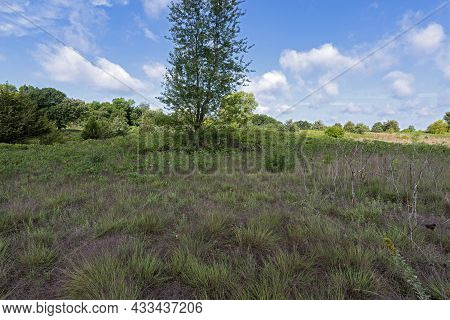 Woodlands And Prairie At Grey Cloud Dunes Scientific Natural Area In Cottage Grove
